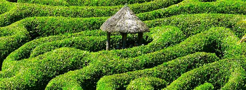 Hedge maze - image: Pixabay