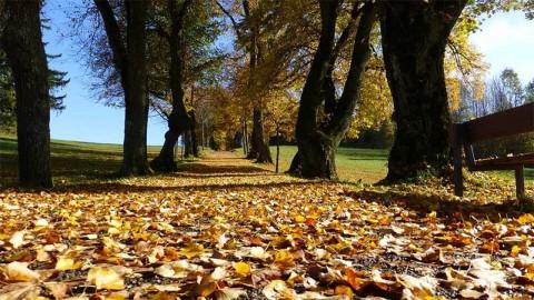Autumn leaves and woodland - photo: Pixabay