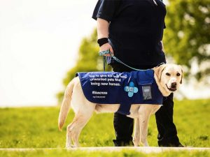 Blue Cross uses dogs for mobile contactless fundraising