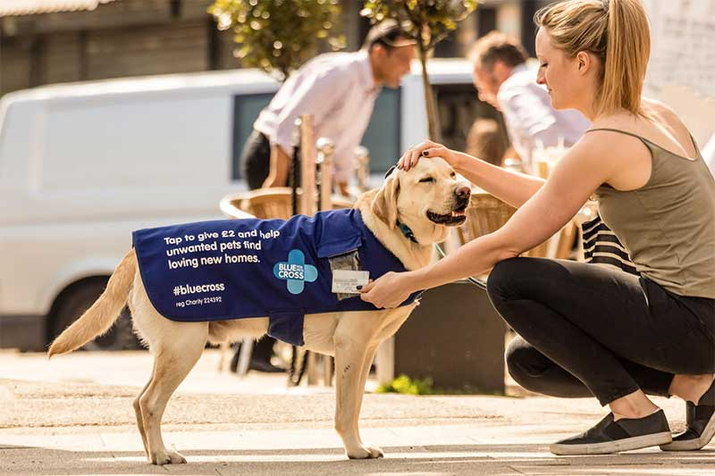 Smudge the Tap Dog fundraising for The Blue Cross