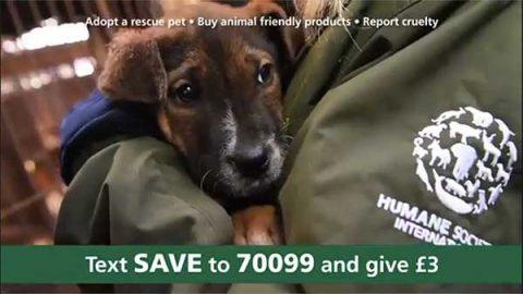 Humane Society International/UK's first DRTV appeal