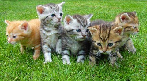 Five kittens - image: Pixabay