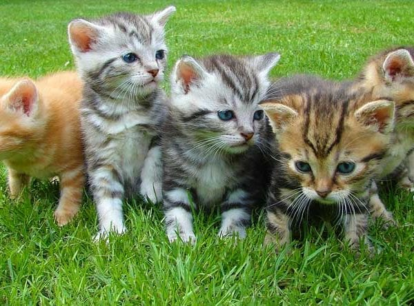 Five kittens - image: Pixabay