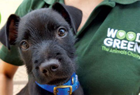 Puppy at Wood Green