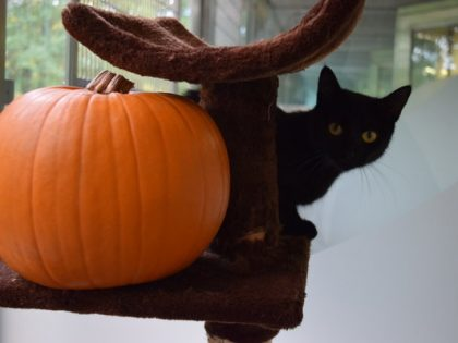 5 spook-tacular 2016 Halloween fundraising events