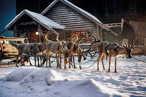 Reindeer and sleigh from M&S Christmas advert 2016