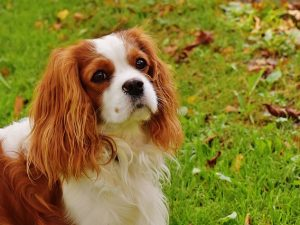 Trustee issues led to misappropriation of funds at dog charity