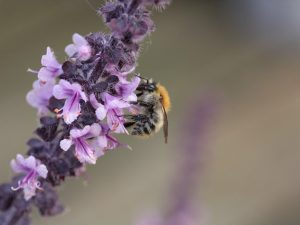 Tesco's sweet donation helps the bees