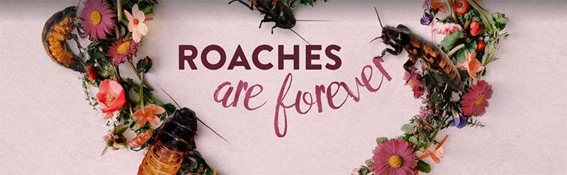 Roaches are forever - Valentine's Day fundraising