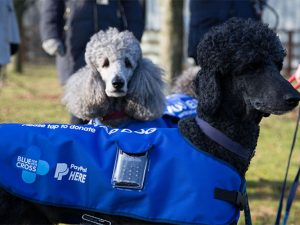 Blue Cross' Tap Dogs to offer contactless giving across the UK
