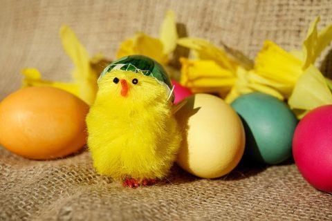Easter chicken eggs