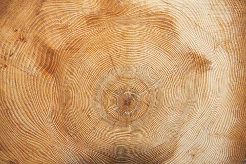Tree rings - photo: Pixabay
