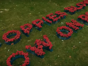 Royal British Legion recreates In Flanders Fields in poppies to launch 2017 Poppy Appeal