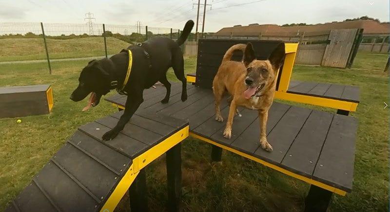 Dogs in Dogs Trust VR film