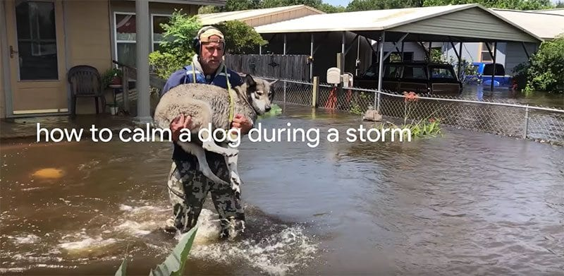 Google search - how to calm a dog during a storm
