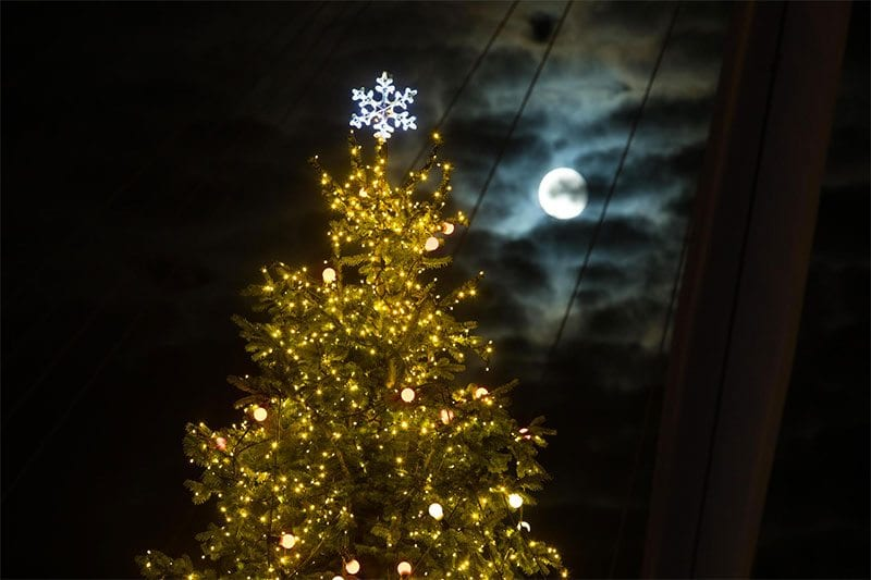 #LightUpXmas - a moonlit Marie Curie Christmas tree on London's Southbank