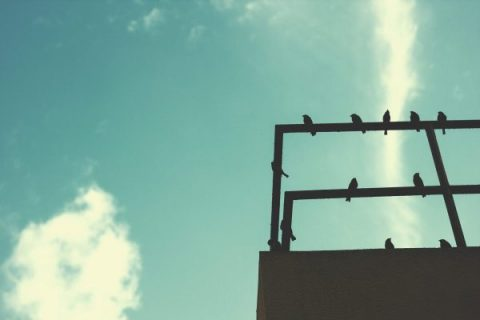 Birds against a blue sky - photo: Rawpixel