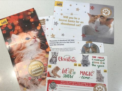 CATS Protection direct mail appeal