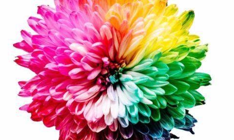 Multicoloured flower petals - photo: Sharon Pittaway on Unsplash.com