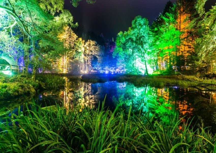 Enchanted Forest 2017 c Angus Forbes