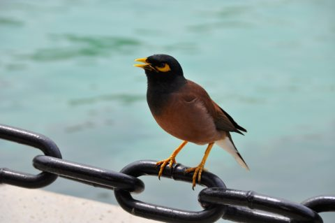 Bird on a chain - photo: Pixabay