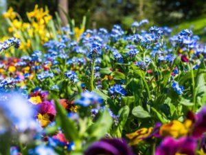 National Garden Scheme & Macmillan Cancer Support celebrate 35 year partnership