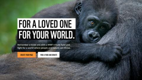 WWF_InMem_Home