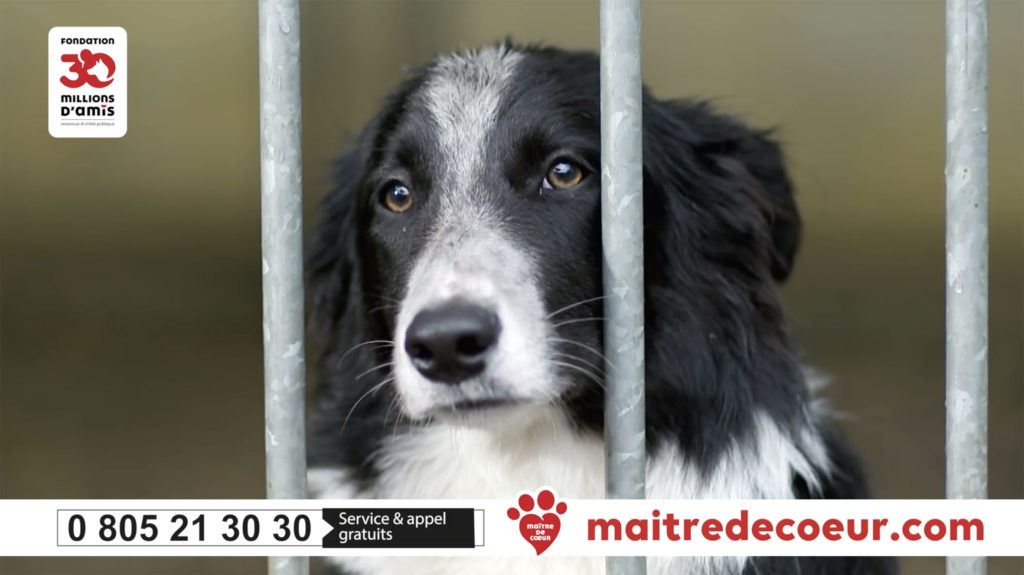 Dog in 30 Million appeal video