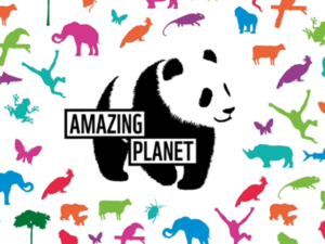 WWF-UK launches monthly subscription product