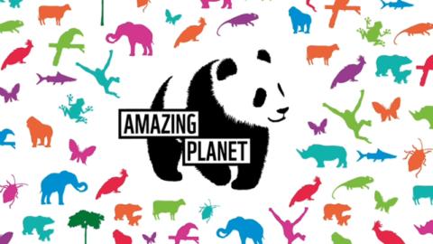WWF Amazing Planet