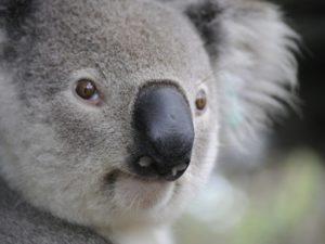CAF helps UK public donate to Australian bushfire appeals