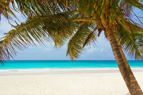 Palm tree on a tropical beach - photo: Unplash