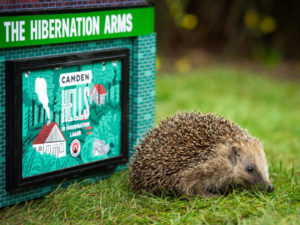 Brewery launches beer & mini pub hideaway in support of hedgehogs