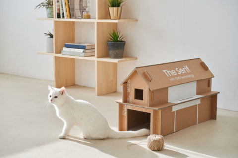 White cat outside a cardboard box home - photo: Samsung and Dezeen