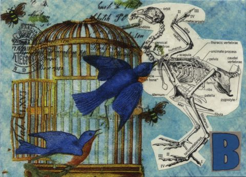 Blue birds and open cage - photo: CaZaTo Ma on Flickr.com