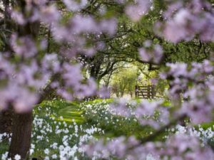 National Garden Scheme donates almost £3m despite 2020's challenges
