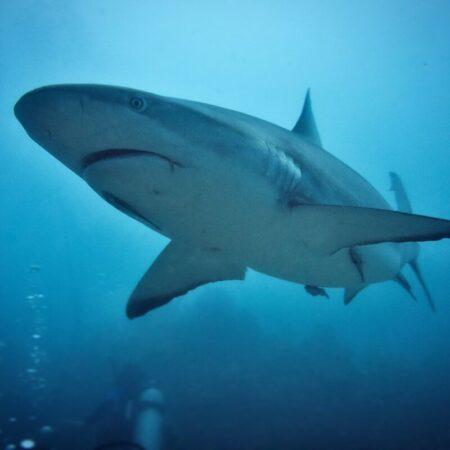Shark - photo: Pexels.com