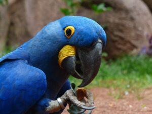 Blue bird - photo: Pexels and Pixabay