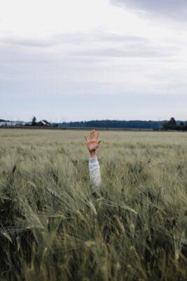 Raised hand in a field. Photo: Unsplash.com